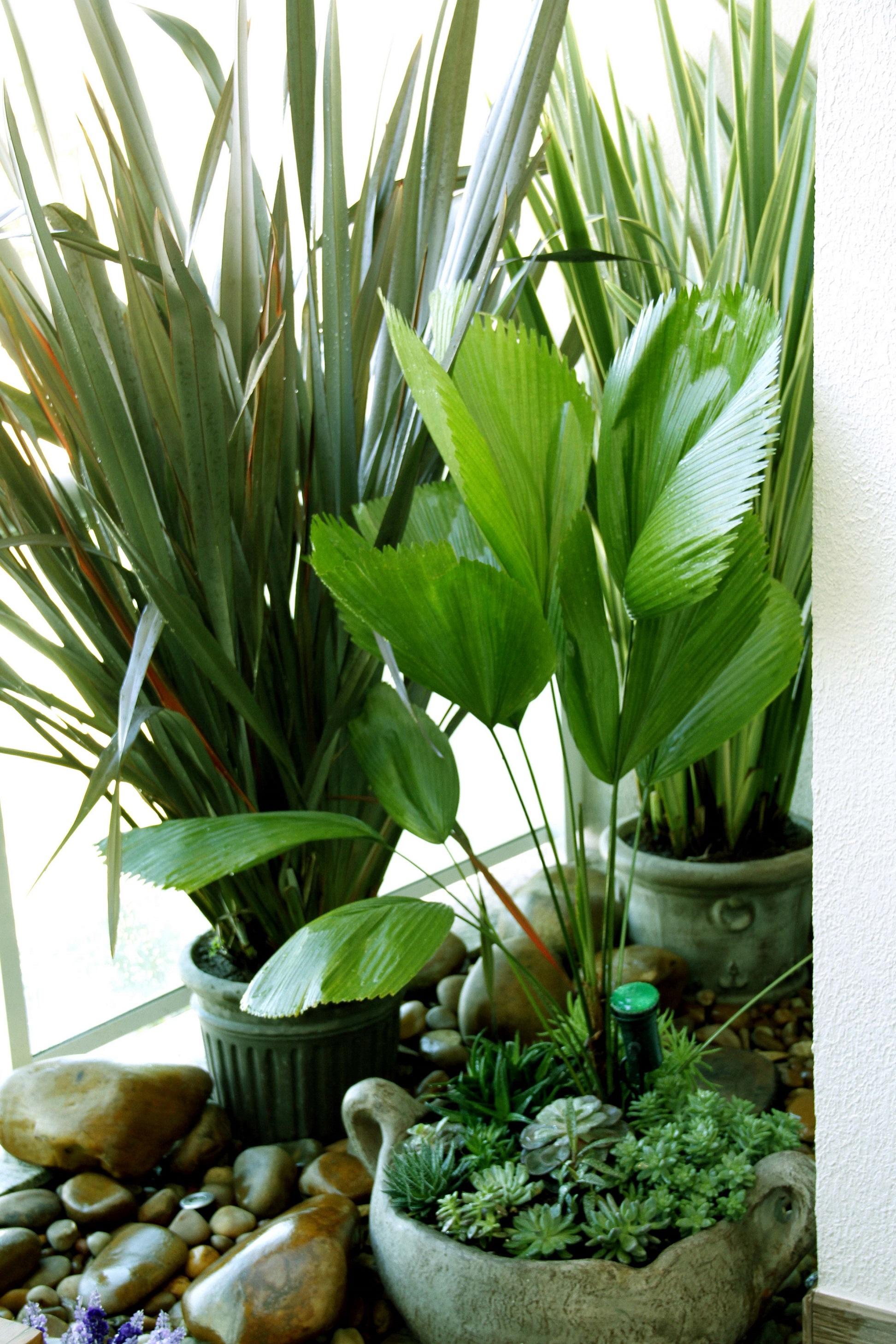 O verde natural sempre traz muita calma, aconchego, valorizam a arquitetura e emprestam vida ao design de interiores.